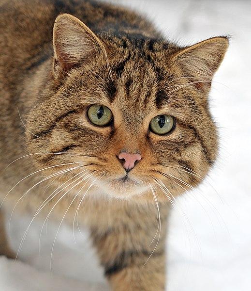 Сьогодні – День кота в Європі!